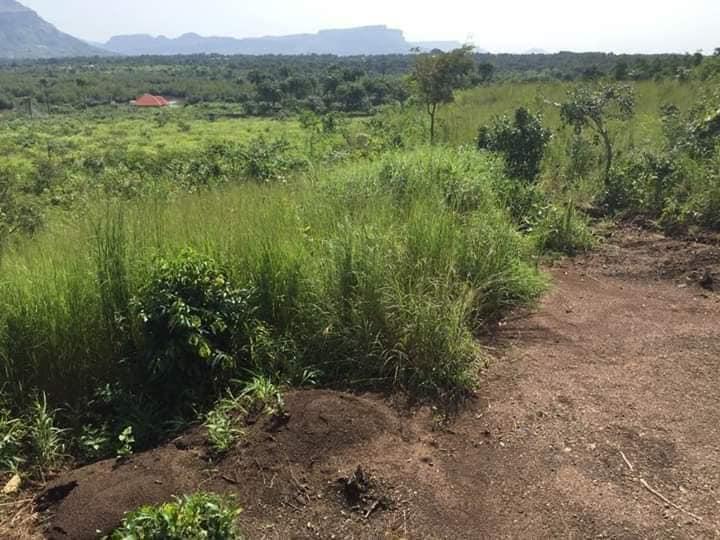 Coyah: 10 nouvelles parcelles offertes aux victimes de Kaporo-Rails