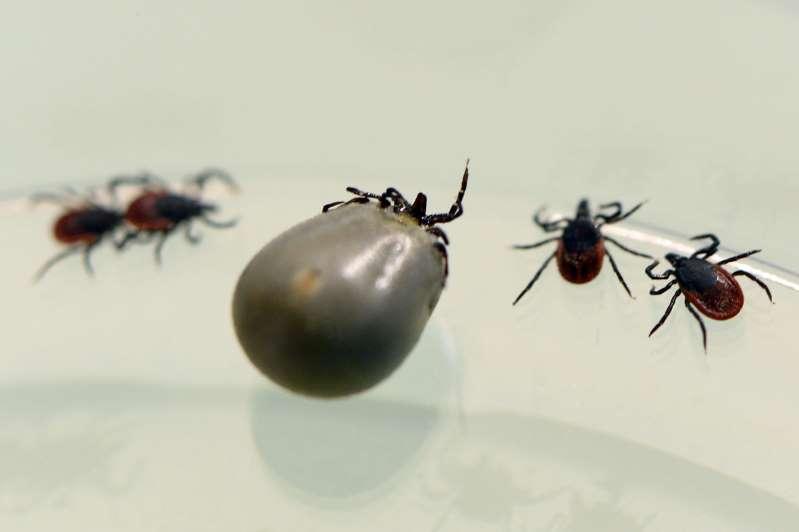 L'armée américaine a-t-elle propagé la maladie de Lyme?