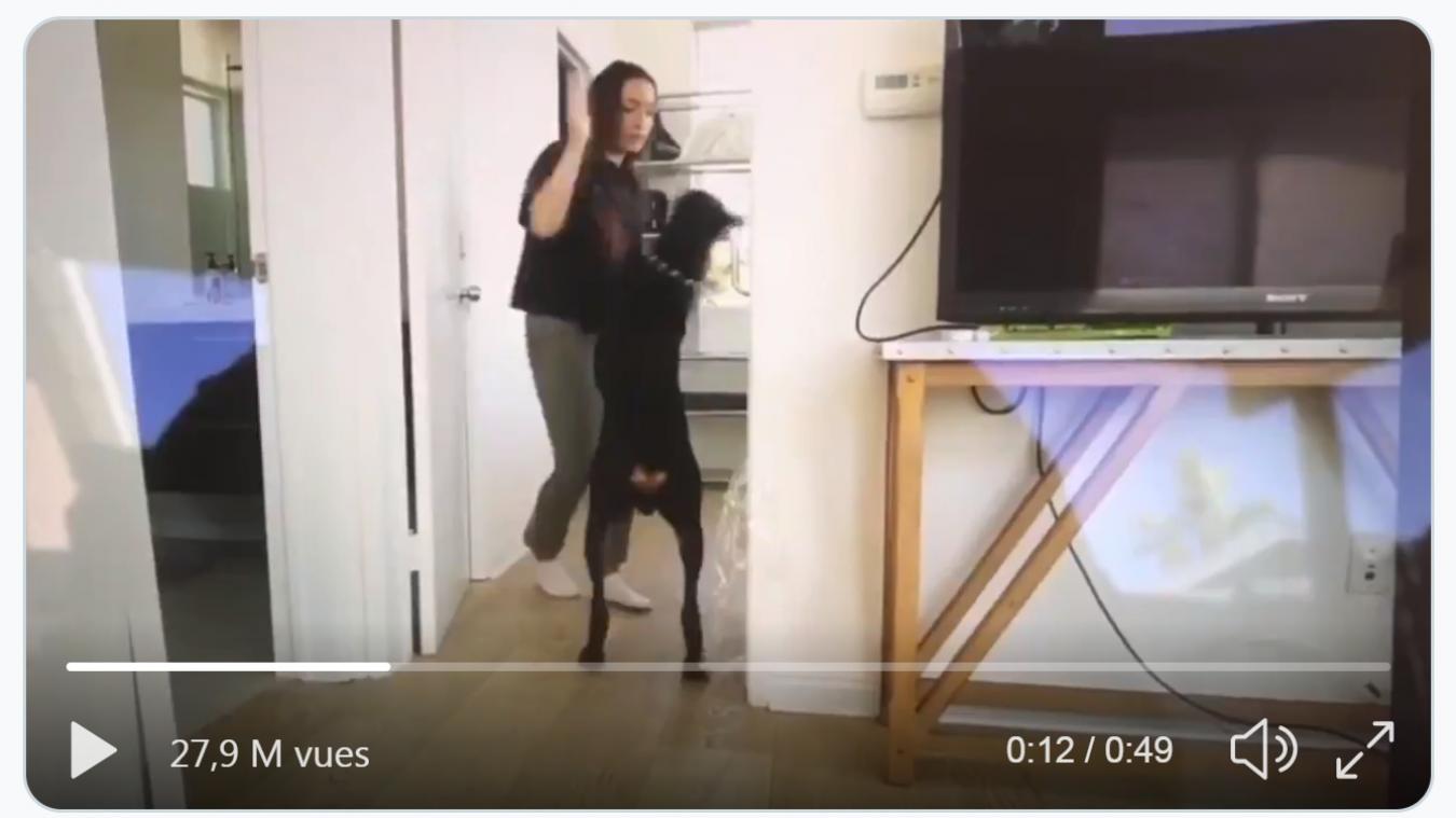 Une YouTubeuse dans la tourmente après avoir posté par erreur une vidéo où elle frappe son chien