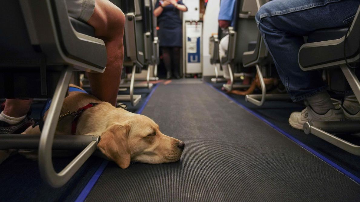 Une compagnie aérienne va peut-être devoir rembourser… un chien