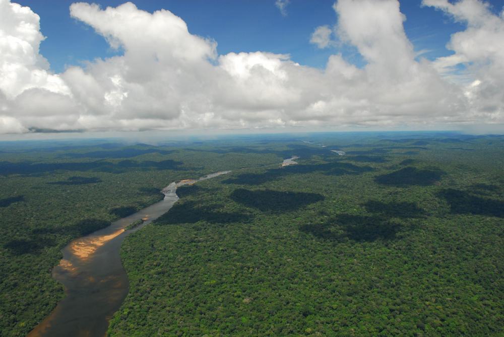 La forêt amazonienne n'absorbe plus le carbone mais elle en rejette